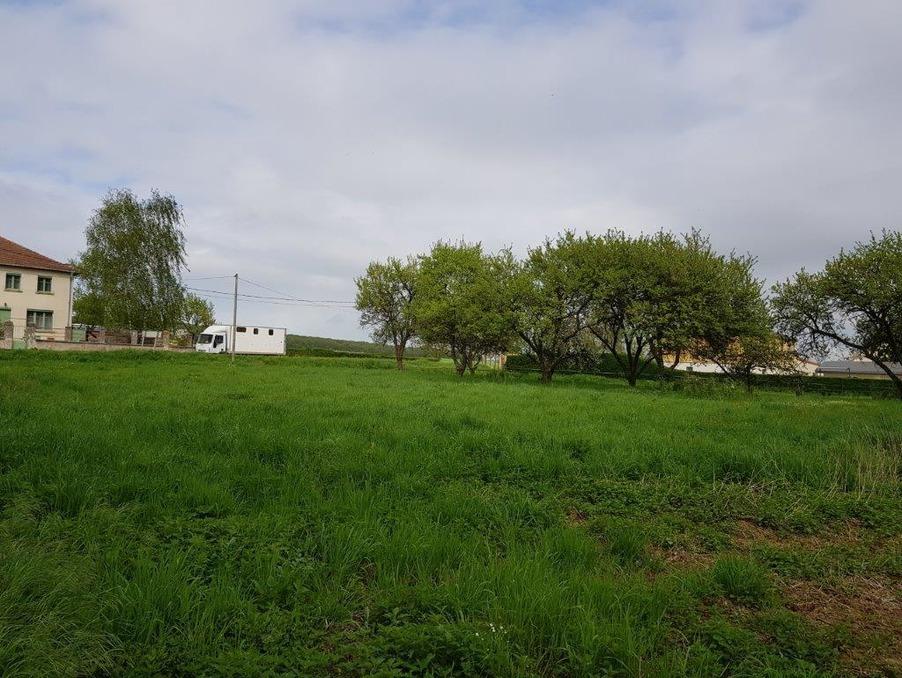 Image 2 de l'annonce : GOVILLER Vente terrain 984m2